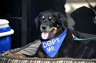 Rottweiler Dog for adoption in Mira Loma, California - Mesa