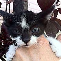 Adopt A Pet :: Leland - Santa Monica, CA