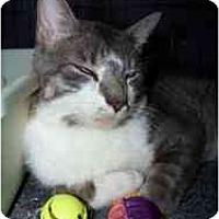 Adopt A Pet :: I94 - Milwaukee, WI