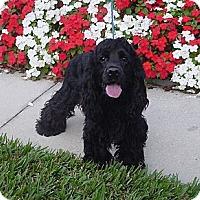 Adopt A Pet :: Rocky - Franklin, NC