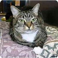 Adopt A Pet :: Hope - New Port Richey, FL
