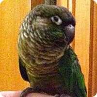 Adopt A Pet :: Pico - Lenexa, KS