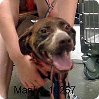 Adopt A Pet :: Marilyn - Greencastle, NC