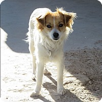 Adopt A Pet :: BUTTERCUP - Nampa, ID