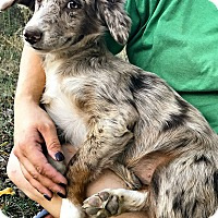 Adopt A Pet :: Sydney - Starkville, MS