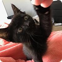 Adopt A Pet :: Storm - Tampa, FL