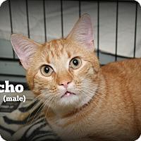 Adopt A Pet :: Nacho - Glen Mills, PA