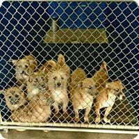 Adopt A Pet :: December - Harmony, Glocester, RI