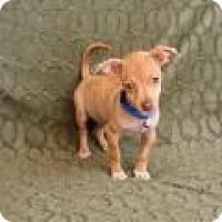 Adopt A Pet :: Mr. Wrinkles - Yucaipa, CA