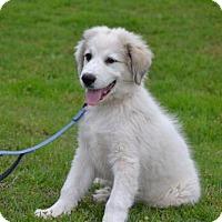 Adopt A Pet :: Hoss - Whitewright, TX