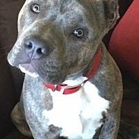 Adopt A Pet :: Chevy - San Diego, CA