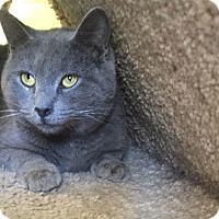 Adopt A Pet :: Blue - Media, PA