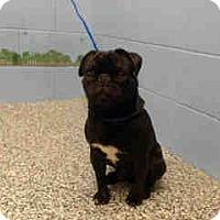 Adopt A Pet :: URGENT ON 5/6  San Bernardino - San Bernardino, CA