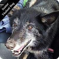 Adopt A Pet :: Wylie T Coyote - Cupertino, CA