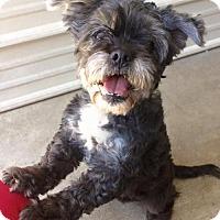 Adopt A Pet :: Bows (URGENT) - Corning, CA