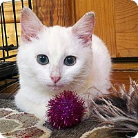 Adopt A Pet :: Edelweiss - Chicago, IL
