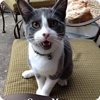 Adopt A Pet :: Oscar Meyer - Bentonville, AR