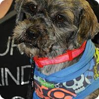 Adopt A Pet :: Joaquin - N. Babylon, NY