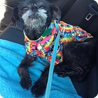 Adopt A Pet :: Anna - Memphis, TN