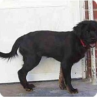 Adopt A Pet :: Darla - Family Dog ! - Chandler, IN