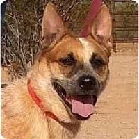 Adopt A Pet :: Maggie Mae ADOPTED - Phoenix, AZ