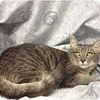 Adopt A Pet :: Axl - Orlando, FL