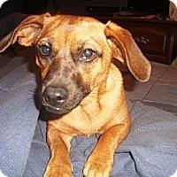 Adopt A Pet :: MiMi - Irvington, KY