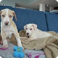 Adopt A Pet :: Leo - Marlton, NJ