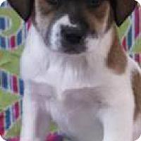 Adopt A Pet :: Sheldon - Bedminster, NJ