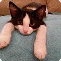 Adopt A Pet :: Dublin - McHenry, IL