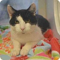 Adopt A Pet :: Spot - New York, NY