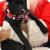 Adopt A Pet :: Jack Jack - Bedford, VA