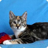 Adopt A Pet :: I'M ANYA AND I LUVZ CATNIP! - jacksonville, FL