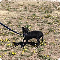 Adopt A Pet :: Benny - Larned, KS