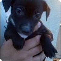 Adopt A Pet :: Thumbelina - Bakersfield, CA