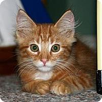 Adopt A Pet :: Jaco - Arlington, VA