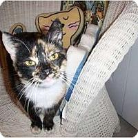 Adopt A Pet :: Carly - Jenkintown, PA