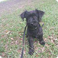 Adopt A Pet :: El Guapo (means handsome boy!) - Foster, RI