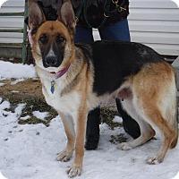 Adopt A Pet :: INGA - Nampa, ID