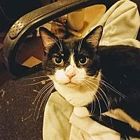 Adopt A Pet :: Mr Biscuit - Dallas, TX