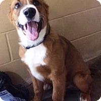 Adopt A Pet :: Finnegan - Oswego, IL