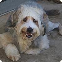 Adopt A Pet :: Frosty - Bedminster, NJ