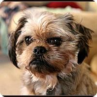 Adopt A Pet :: STAVROS - ADOPTION PENDING - Salem, OR
