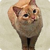 Adopt A Pet :: Sonny - Laguna Woods, CA