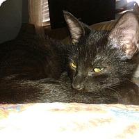 Adopt A Pet :: Hans - Seminole, FL