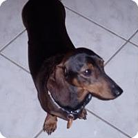 Adopt A Pet :: Hansel - Jacobus, PA