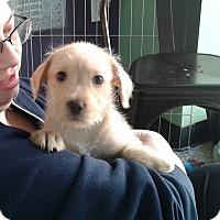Adopt A Pet :: Cajun - Thousand Oaks, CA