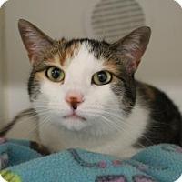 Adopt A Pet :: Rin - Reisterstown, MD