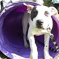 Adopt A Pet :: Hera - Surrey, BC