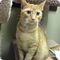 Adopt A Pet :: Samson - Birmingham, AL